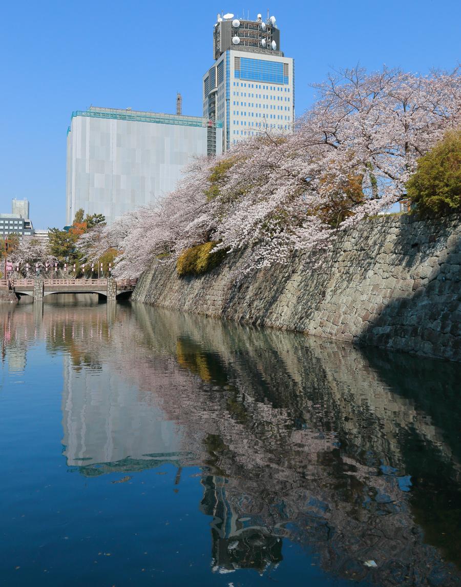 駿府城公園桜